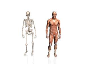 Die Biomechanik hilft Bewegung zu verstehen..
